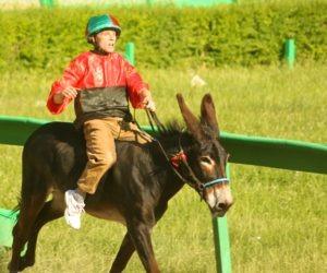 donkey jockey